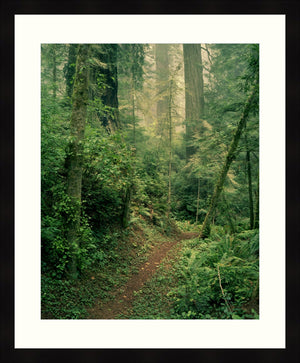 Framed Print - Forest Path