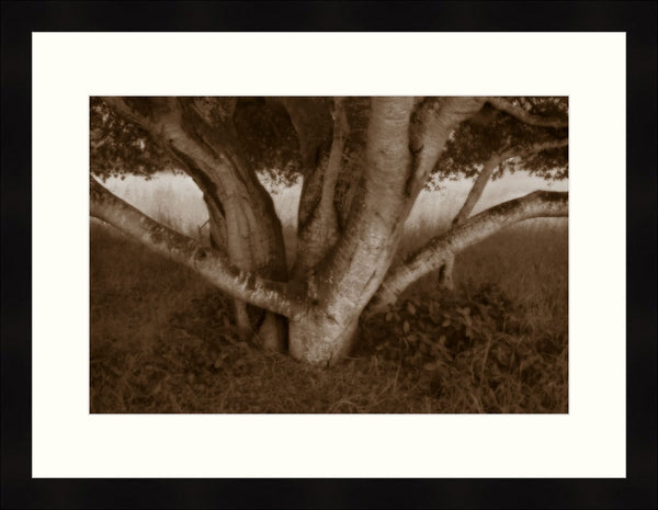 Framed Print - Shade Tree