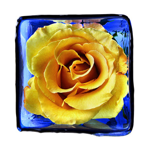 Yellow rose in blue vase