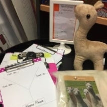 Alex the baby alpaca from KellyandWindsor Australia is at school helping children learn about alpaca fleece.