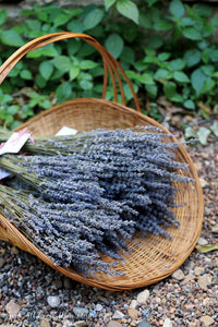 Dried French Provence Fragrant Lavender