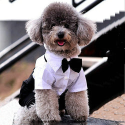 Cute Prince Gentlemen Bow Tie Suit for Small Dogs