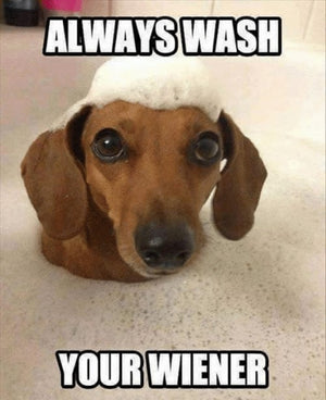 Always wash your wiener funny dog quote wash your dog
