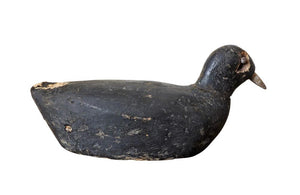 OLD COOT DECOY