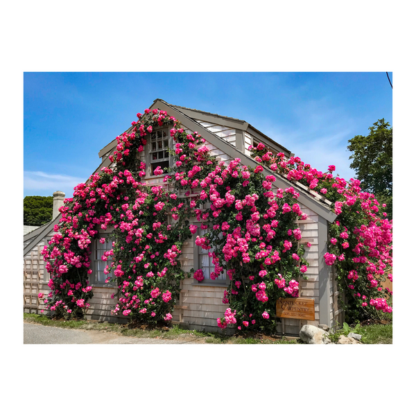 Sconset Rose Cottage