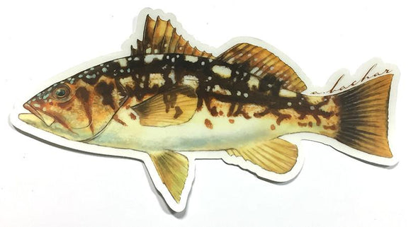 Abachar Calico Bass - Sticker 7