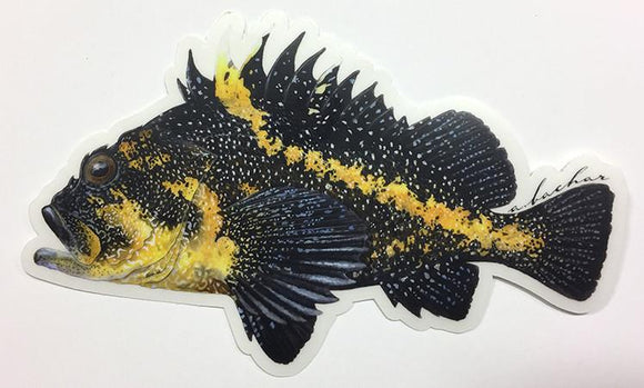 Abachar China Rockfish - Sticker 6.5