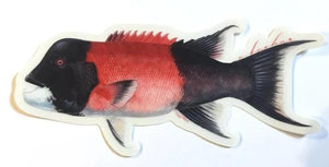 Abachar Sheephead - Sticker 8""