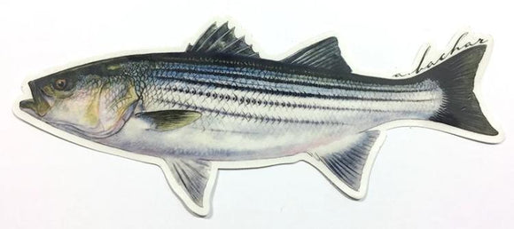 Abachar Striped Bass - Sticker 8.5