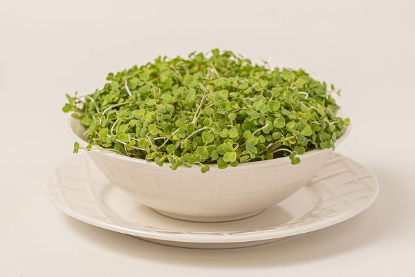 Moutarde Wasabi (Micropousse)