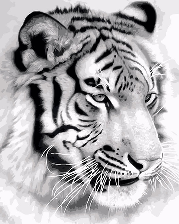 2017 Digital Diy Oil Painting By Numbers Tiger Wall Decor Picture On Canvas Oil Paint Coloring By Number Drawing Animals