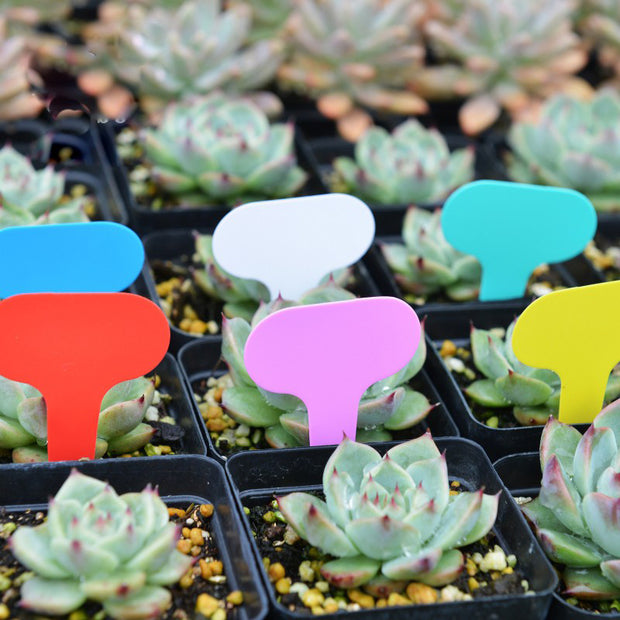 Ground Label Gardening Label Frosted T-type Plant Tag Nursery Flower Label Plastic Plant Labels