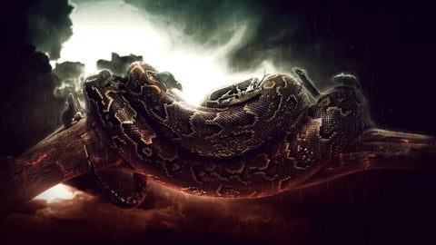 Snake Dreams  Meaning