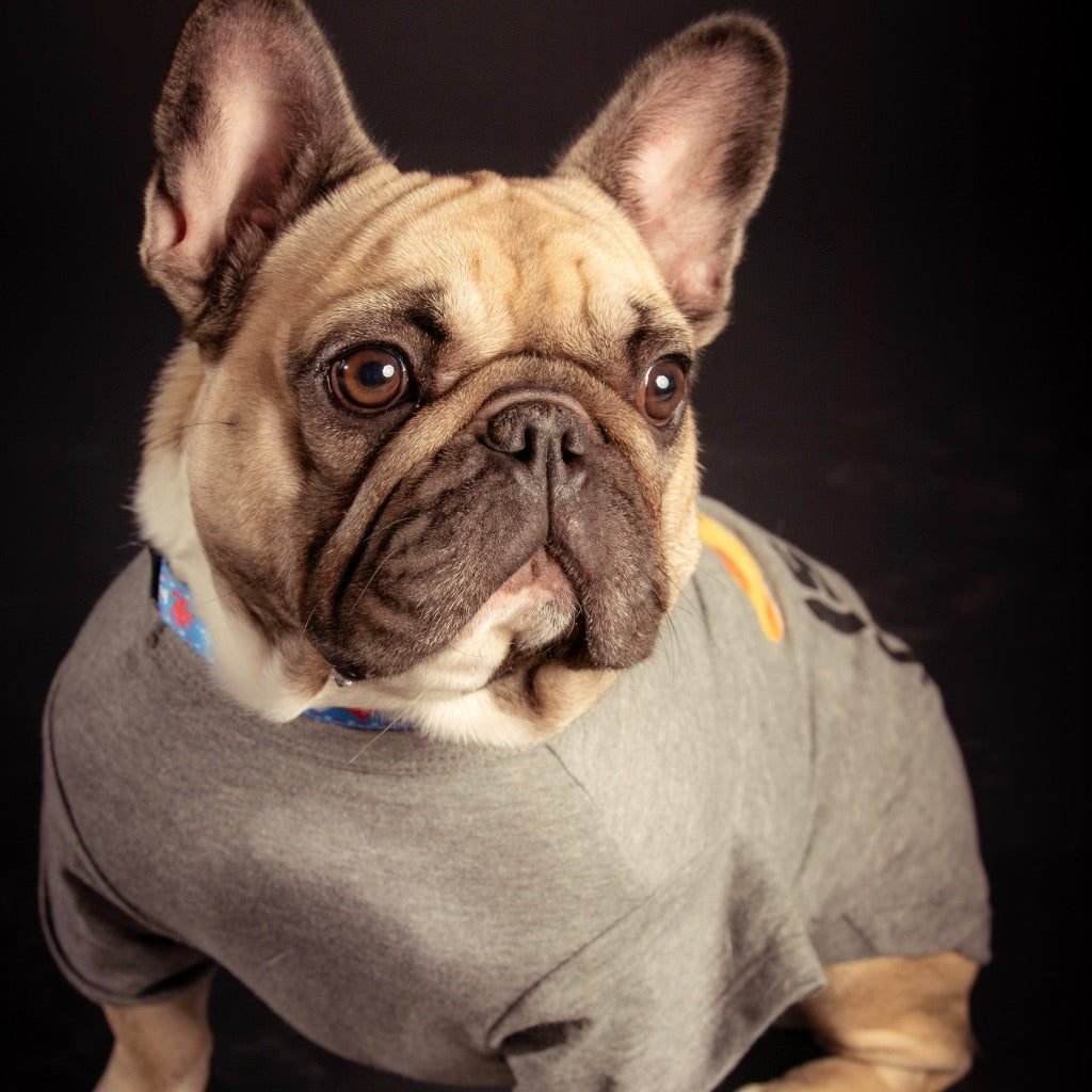 A dog wearing a jacket looking tough.
