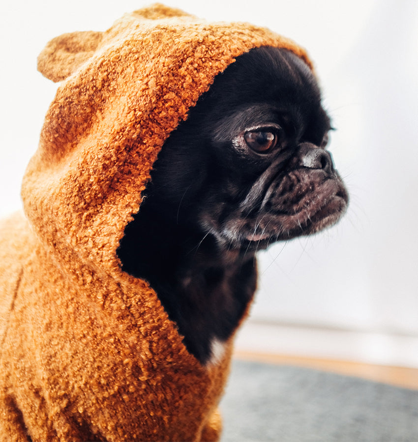 A pug dog in an orange towel sweater after a bath