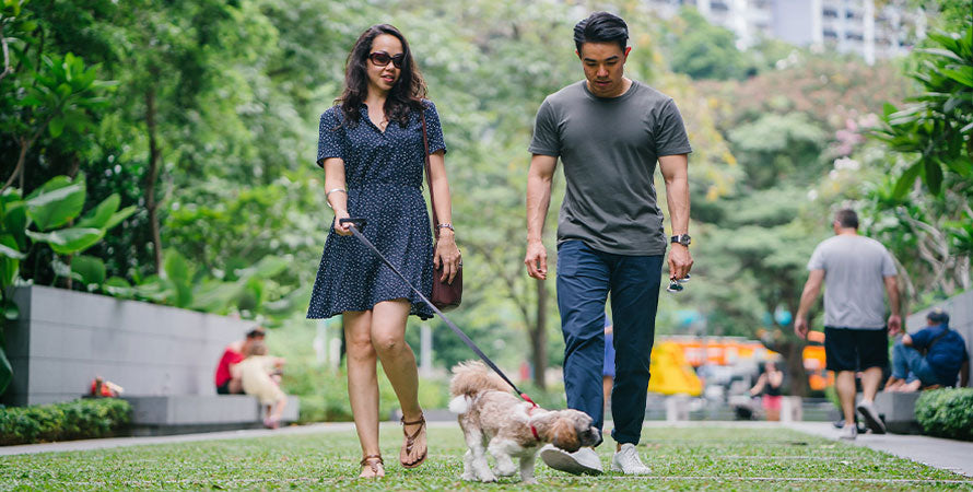 A couple walking their dog in a park]