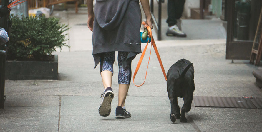 A rear shot of an owner and dog out walking in the city.