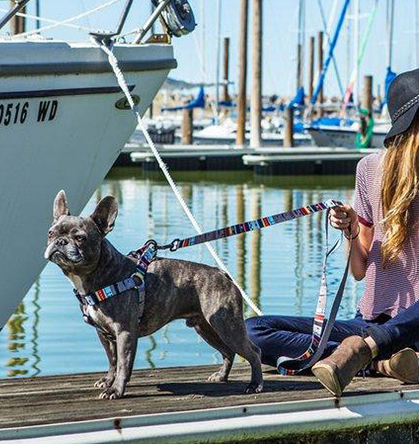 A Boston terrier held by the NativeLines leash while the owner is sitting on a dock.