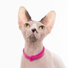 NUVUQ Cat Collar - Black