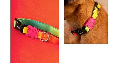 Zee.dog Gradient Collar - Citrus