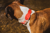 NEOPRO Dog Collar - Coral