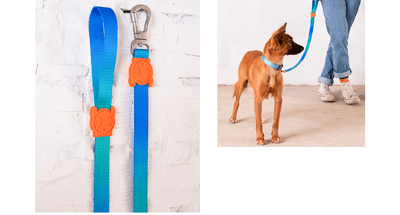 Zee.dog Gradient Leash - Tide