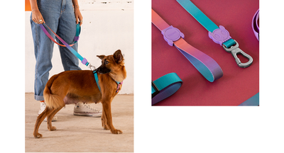 Zee.dog Gradient Leash - Wave