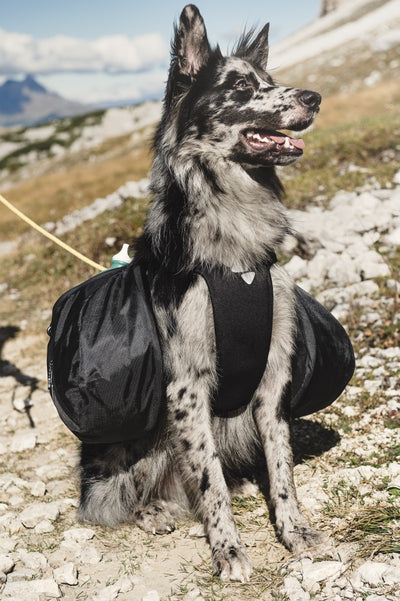 Trail Pack Harness