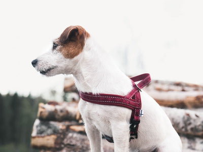 Casual Padded Harness - River