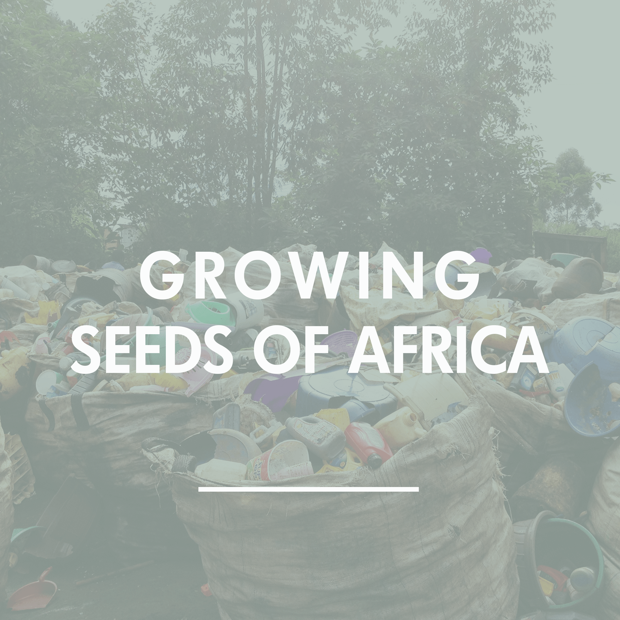Growing Seeds of Africa