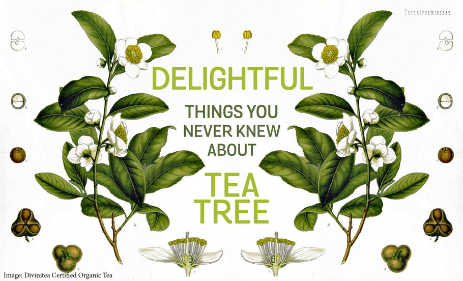 Delightful Things You Never Knew About Tea Tree Oil