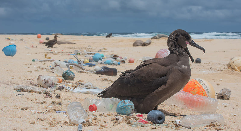 "Photo by Matthew Chauvin, ""The Ocean Cleanup"""