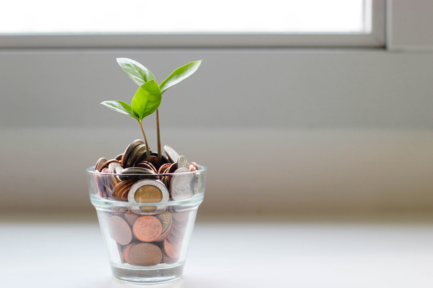 Plant in between money