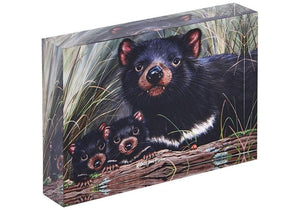 Fauna of Aus Tasmanian Devils Mini Gallery