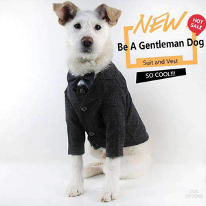 Handsome Gentleman Dog Suit-Dog Options