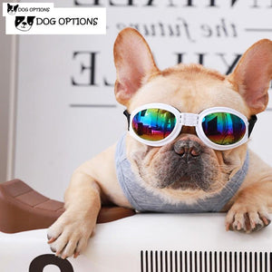 Frenchie  Sunglasses