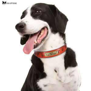 Custom Leather Dog Collar - Personalized Dog Collars-Dog Options