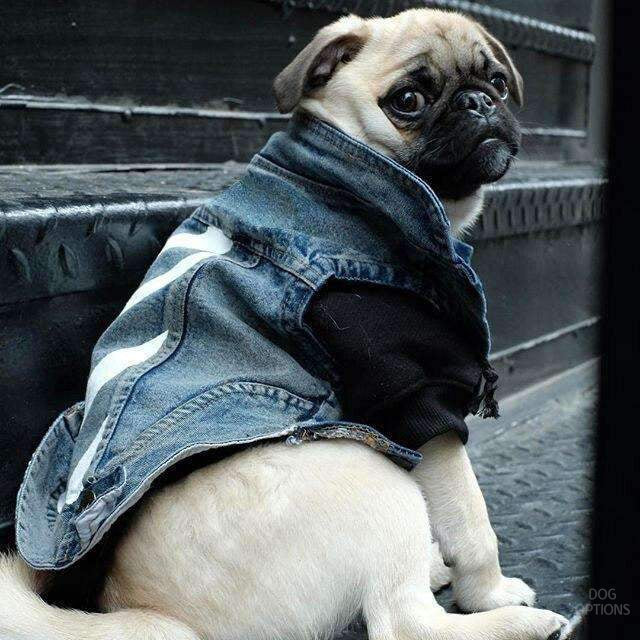 Fashion Jean Jacket for Dog-Dog Options