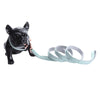 The Joanne Dog Collars and Leash Set