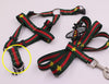 Pucci Dragonfly Harness & Leash Set