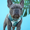 Green Hawaii Dog Harness Set