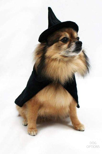 Halloween Witch Dog Costumes-Dog Options