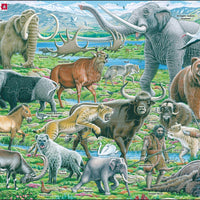 Wildlife at the time of the Neanderthals