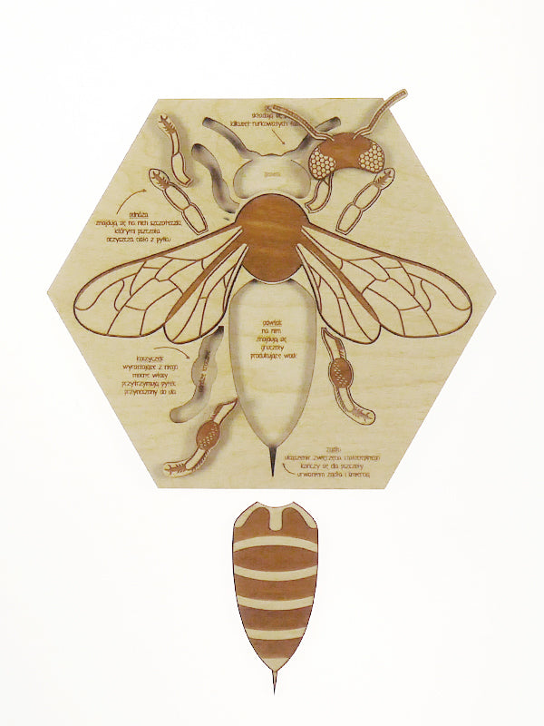 Bee Anatomy Puzzle