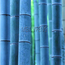 Load image into Gallery viewer, Meinvpeng Blue Bamboo Plants (50 Pieces) - Meraki Cole Company