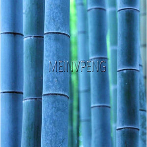 Meinvpeng Blue Bamboo Plants (50 Pieces) - Meraki Cole Company