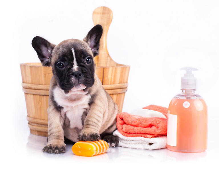 Toxic Cleaning Products For Pets
