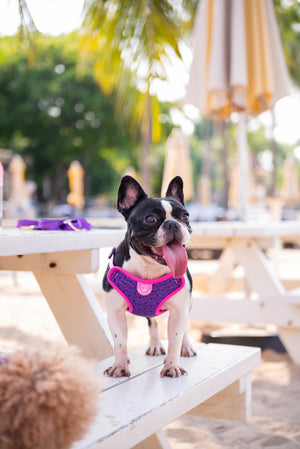 Gentle Pup - Piper Pink Easy Harness
