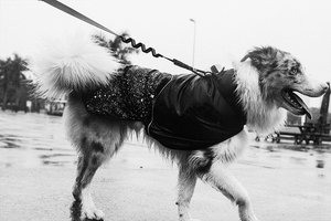 Zee.Dog Ozzy Raincoat