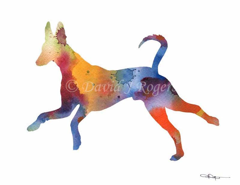 A Ibizan Hound 0 print based on a David J Rogers original watercolor